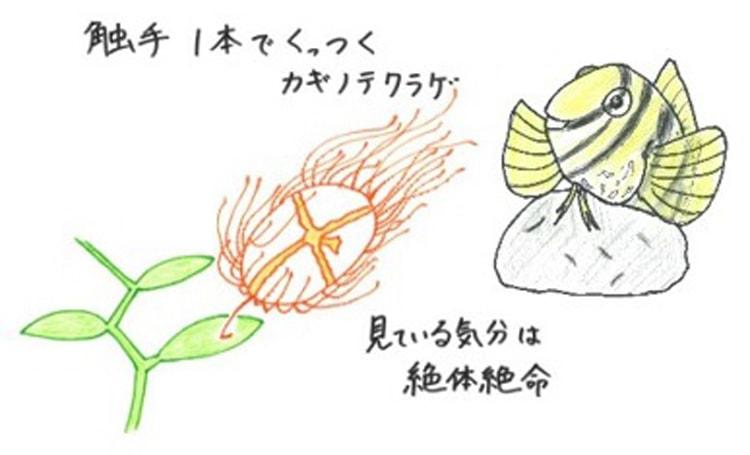 すみだ水族館と京都水族館の合同企画「私の愛するいきもの展」