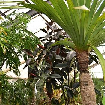 〈HAY TOKYO〉で企画展「叢の植物展」を開催、〈叢〉店主・小田康平が集めた個性豊かな植物を紹介