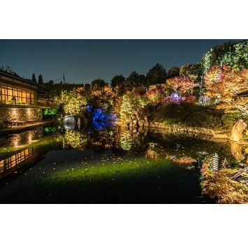 都会の中の幻想的オアシス「秋の庭園ライトアップ」が豊島区立目白庭園で開催!