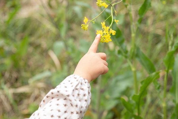 ビンゴに描かれたお題の花を見つけて大興奮の子供。「それは菜の花っていうんだよ」など、会話を弾ませてみて。
