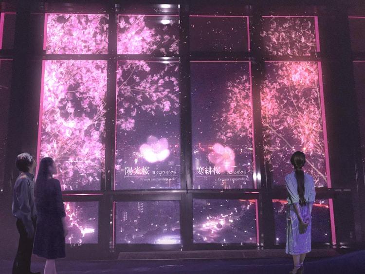 東京タワー「TOKYO TOWER CITY LIGHT FANTASIA~YOZAKURA NIGHT~」