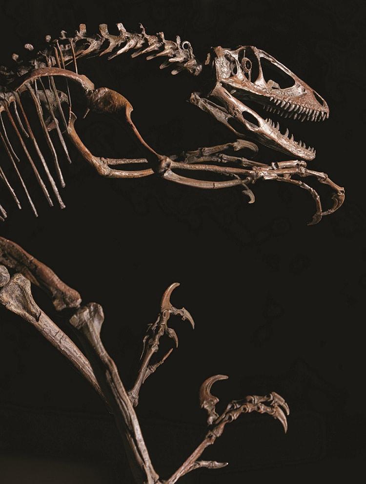 〈国立科学博物館〉「恐竜博2019」