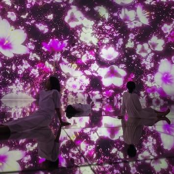 「チームラボプラネッツ」の春展示がスタート。超巨大没入空間に桜が広がる