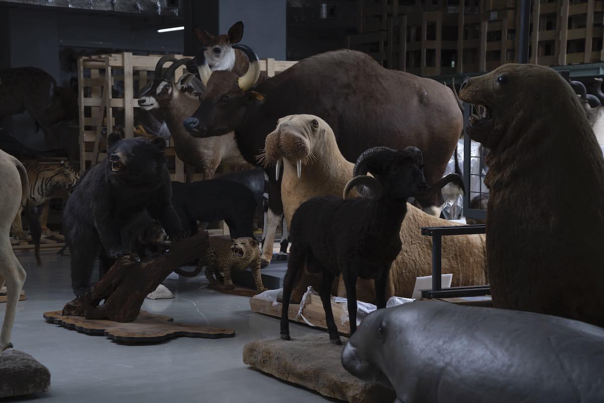 自然史標本棟 動物剥製 提供:国立科学博物館 写真:©︎Gottingham