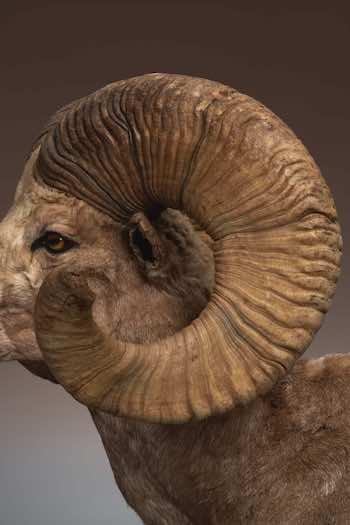 大分県立美術館で開催中の「WHO ARE WE 観察と発見の生物学」、 アノ貴重な標本が展示