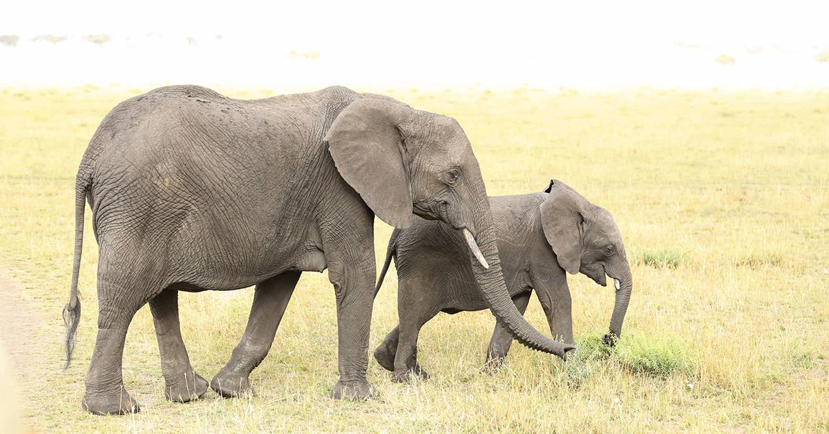 動物の赤ちゃんが成長する早さは?