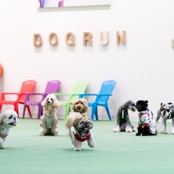 愛犬とのお出かけに! 国内最大級の屋内ドッグランがお台場ヴィーナスフォートに誕生